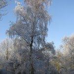 Winter in Heempark Delft