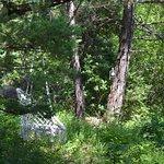 Подвесное кресло-гамак в лесу