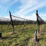 Recorriendo el viñedo se aprende acerca de esta actividad ancestral