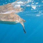 Swimming with a Green Sea Turtle in Tenerife.