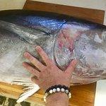 Thon en pêche locale de 35 kilos