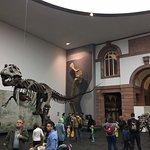 森肯伯格自然歷史博物館照片