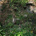 Phang Nga Elephant Park Photo