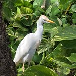 Egrets and beautiful foliage on the grounds