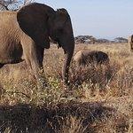 The rugged, beautiful semi-arid Samburu ecosystem.