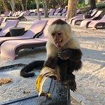 Planet Hollywood Beach Resort Costa Rica Foto