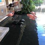 Flamingos in Paradisus lobby