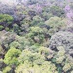 Museu da Amazonia (MUSA) Φωτογραφία
