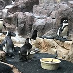 Como Park Zoo & Conservatory Photo