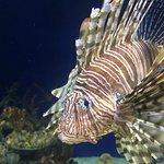 Georgia Aquarium Resmi