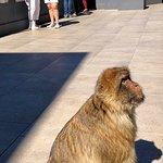 Beautiful Barbary Macaques