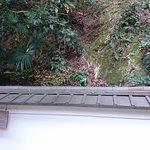 琵琶湖區內景觀