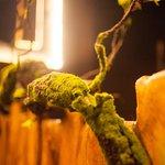 effirium_  instagram