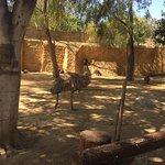 Limassol Zoo Photo