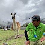 Alpaca Expeditions – fotografia