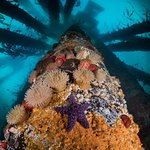 Diving Painted Pillars, Campbell River