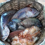 fresh fish dentex, octopus, squid, sea bream!