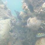 Peixes nos corais