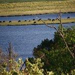 Animals, Chobe River, Chobe National Park, Botswana.