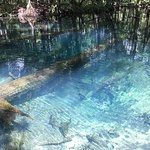 Crystal clear springs of Wacissa river, Jefferson County