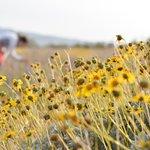 desert bloom :)