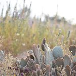 cute cactus in desert bloom