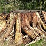 Terra Botanica Foto