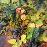 Plante i Tropehuset