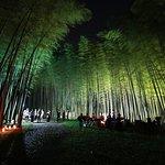 夜のライトアップ。2019年4月1日から6月30日まで日没から夜9時まで開園(最終入場は夜8時半です)。7月からは週末のみの開催です。
