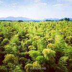 ドローン撮影も可能です。見渡す限りの竹林を上空からお楽しみください!