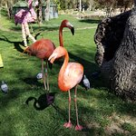 The two friendly flamingos who loved the food available from the office at the entrance
