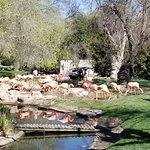 Flamingo land - no fencing