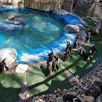 The small penguin enclosure