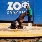 The Sea Lion show which we caught the end of