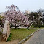 春には枝垂れ桜と梅が咲く