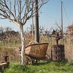 Agriturismo Le Saline Foto