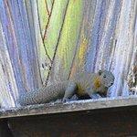 Anantara Mai Khao Phuket Villas - our private squirrel :)
