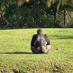 Fantastic Gorillas