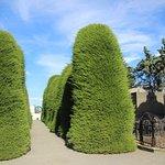 Cementerio Municipal - Topiary - Punta Areans
