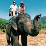 отличный слон !)