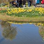 Le miroir des tulipes