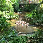 Flamingos! There is a nice area in which you can walk through, really feels like you are in the tropical forest and you'll see flamingos, fish, butterflies as well as the greenery.
