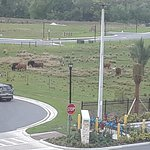 There were COWS just beyond the hotel parking lot. Fun! We saw several guests visited them, while we were there.