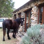 Anyone home? Star visiting guests at Wildebeest Cottage