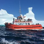Capo de Espera introducing our newest Iceberg Questers to these  ancient, Greenland icebergs up close & personal. ~~~~~~~~ Introducing Capo de Espera, our newest 99 passenger vessel operating from St. John's harbourfront.  Fully windowed, heated cabin. Licensed bar serving Iceberg Beer. Newfoundland music. Canteen. Male & female washrooms.  #ExperienceIQ #ExploreNL #IcebergsNL #ExploreCanada #NLBoatTour #CapodeEspera #LoveStJohns #AncientOnes #NeverGetsOld #ExperiencetheWONDER