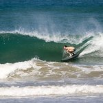 תמונה מSnapper Surf School