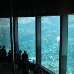 下田海中水族館4