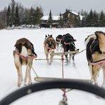 Dog sledding on Devil Track Lake