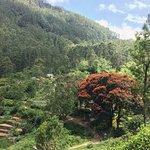 Walking high above tea plantation village