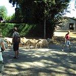 L'élevage de brebis de la ferme